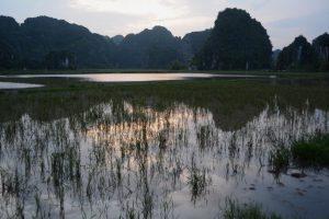 Abendstimmung über Reisfeldern bei Ninh Binh