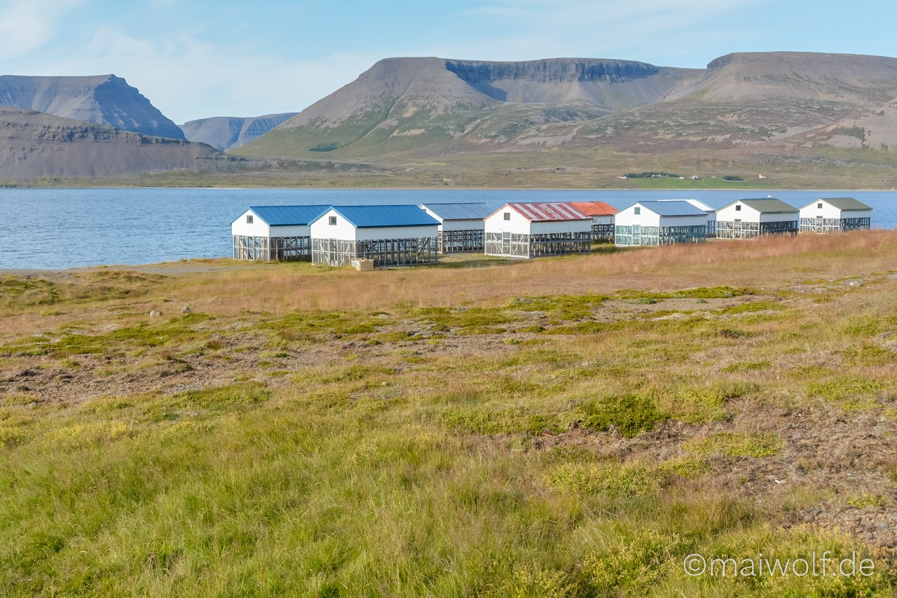Island 125 https://blog.maiwolf.de/island_westfjorde/