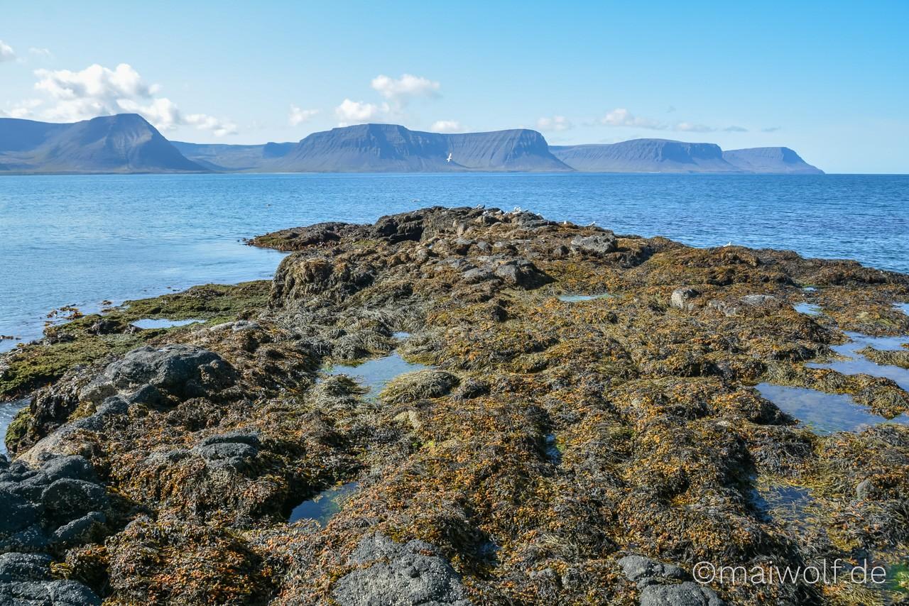Island 145 https://blog.maiwolf.de/island_westfjorde/